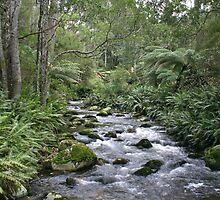 Groom River, NE Tasmania by Christine Beswick
