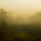 Lost in the mist by beemar