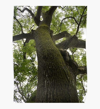 Tweed Tree Poster