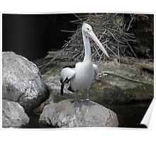 Pelican Pete Poster
