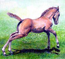 Dun Quarter Horse Foal Portrait by Oldetimemercan