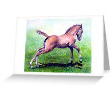 Dun Quarter Horse Foal Portrait Greeting Card