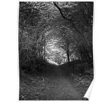 Tweed Woods Poster