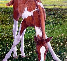 Future Champion Paint Foal Horse Portrait by Oldetimemercan