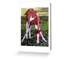 Future Champion Paint Foal Horse Portrait Greeting Card