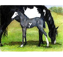 Grulla Paint Mare and Foal Horse Portrait Photographic Print