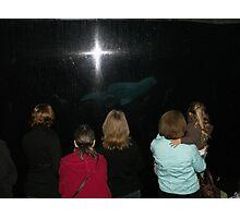 Beluga background Photographic Print