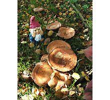 Gnome Surprise! Photographic Print