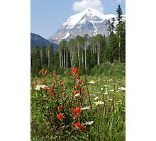 Wildflower Meadow at Mt. Robson Photographic Print