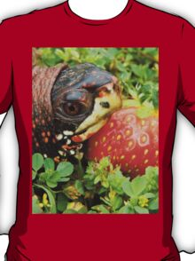 Box Turtle with Strawberry T-Shirt
