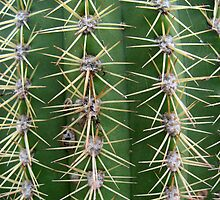 Prickly Cactus no.2 by Orla Cahill Photography