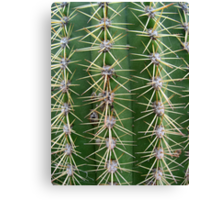 Prickly Cactus no.2 Canvas Print
