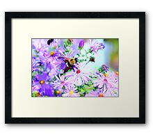 Bumble Bee Beautiful Flower Framed Print