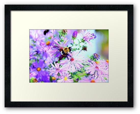 Bumble Bee Beautiful Flower by Jonathan  Green