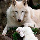 White Wolf by Stuart Robertson Reynolds