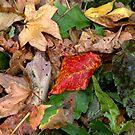 Autumn Leaves by photoloi