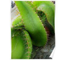 Sculptural Cactus Poster