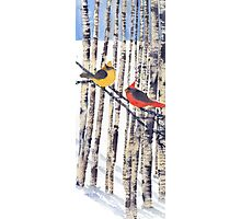 Cardinal Pair in Winter Birches  Photographic Print