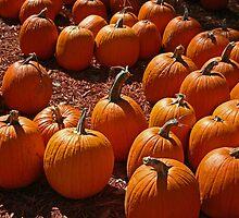 Pumpkin Patch by jessiebea
