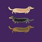 Long Haired Dachshunds off for a trot by Diana-Lee Saville