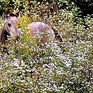 Hiding in flowers....I see you! by Ruth Lambert