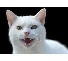 'Vampire cat, He Vants Blood!! Bwhahah....' Photographic Print
