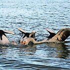 Pelicans Brew by Ersu Yuceturk