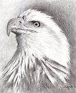 Bald Eagle by arline wagner