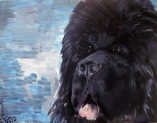 Portrait of a Newfoundland Dog by IowaArtist