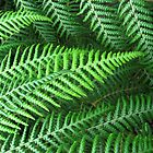 Ferns by Orla Cahill Photography