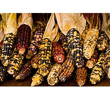 Corn A Plenty Photographic Print