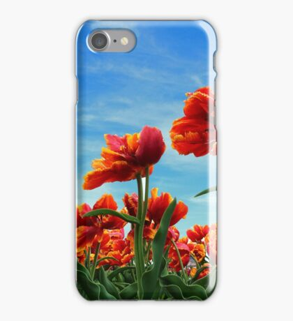 A field of Orange Tulips iPhone Case/Skin
