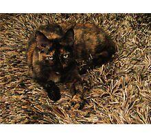 Cammo Cat Photographic Print