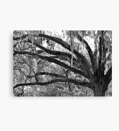 History Branches Out Canvas Print