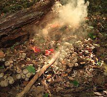 Magical Fungus by Gary Horner