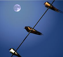 Birds on a Wire by Tizme