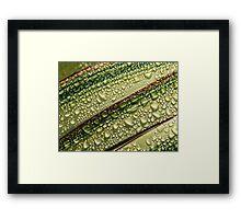 Nature's Colours ~ Variegated Leaves ~ Lyme Regis Framed Print