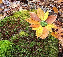 Moss Flowers by Joie  Finley Morris