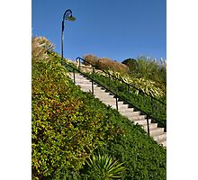 Lighting The Way ~ Langmoor-Lister Gardens Photographic Print