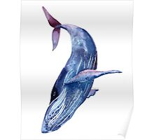 Whale art, watercolor whale, blue whale, purple whale Poster