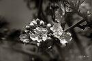Essence of Spring #2 by Vicki Pelham
