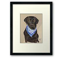 Max the Labrador  Framed Print