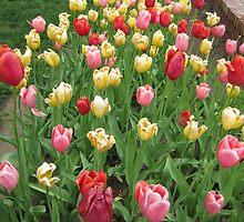 Tulip Trail by Adri Turner