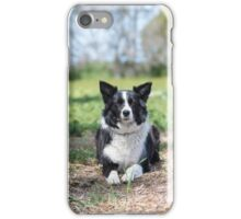 Alley... Beautiful Border Collie....  iPhone Case/Skin