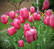 My Focus Was On The Tulips by Adri Turner