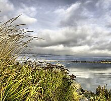 Mouth of the Fraser River by David Friederich