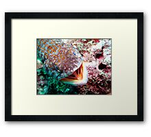 Smiles everyone! Smiles.  Framed Print
