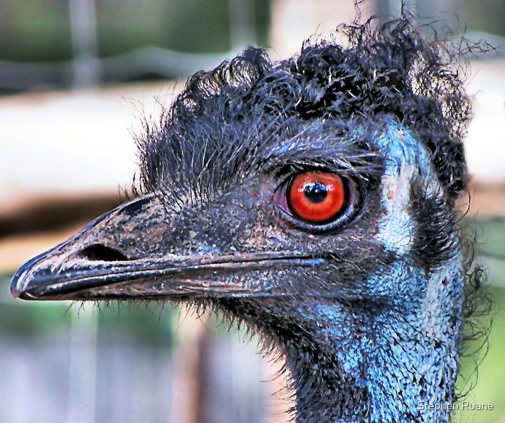 Old Man Emu by Stephen Ruane