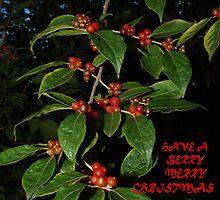 "101009-300X  ""BERRY MERRY CHRISTMAS"" by MICKSPIXPHOTOS"