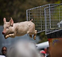 see...Pigs can fly !! by Lisa  Kenny